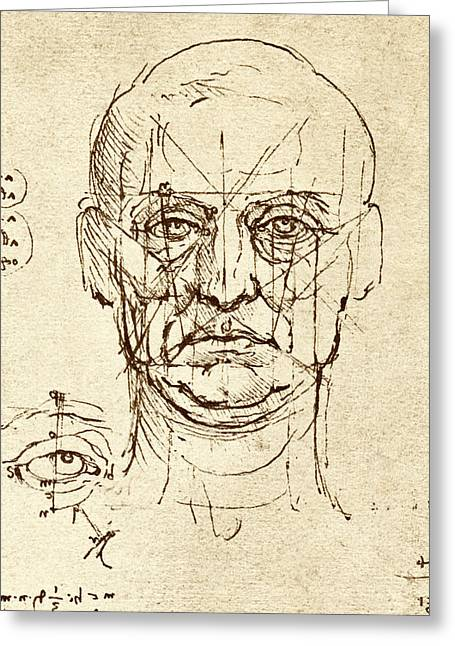 Historical Images Greeting Cards - Facial Anatomy Greeting Card by Sheila Terry