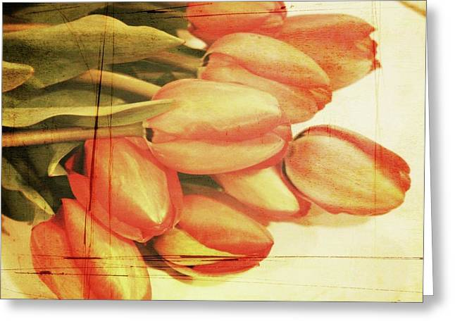 Oregon Flowers Greeting Cards - Faded Tulips Greeting Card by Cathie Tyler