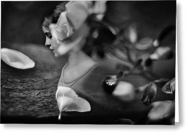 Rose Petals Greeting Cards - Fading Beauty Greeting Card by Rebecca Sherman