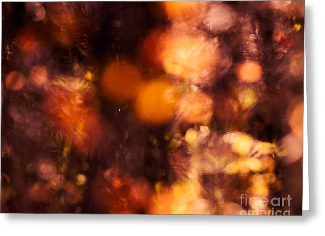 Fading Fall Flame Greeting Card by Royce Howland