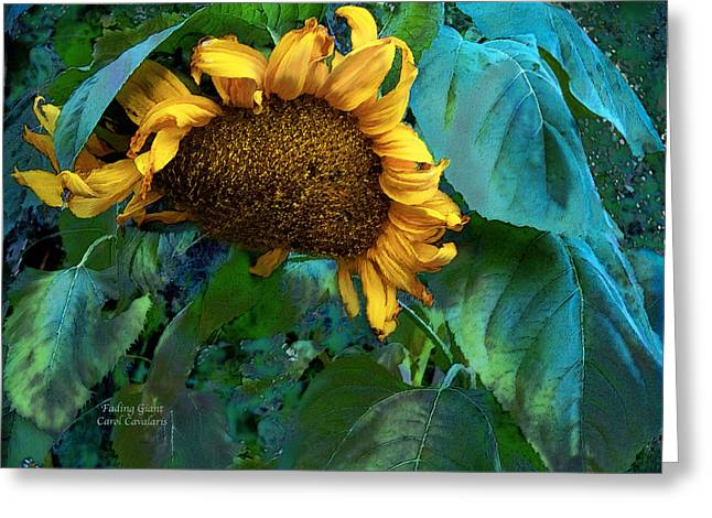 Floral Photos Mixed Media Greeting Cards - Fading Giant Greeting Card by Carol Cavalaris
