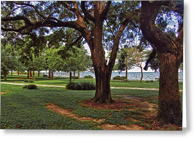 Crimson Tide Greeting Cards - Fairhope Lower Park 2 Trees Greeting Card by Michael Thomas
