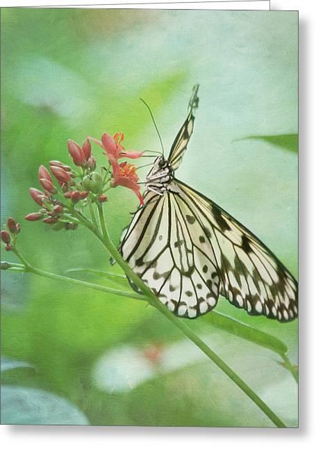 Pompano Greeting Cards - Fairy Dance Greeting Card by Kim Hojnacki