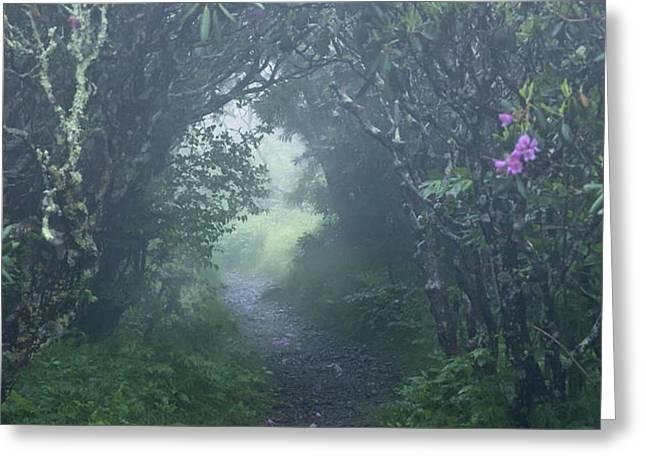 Fairy Path Greeting Card by Rob Travis