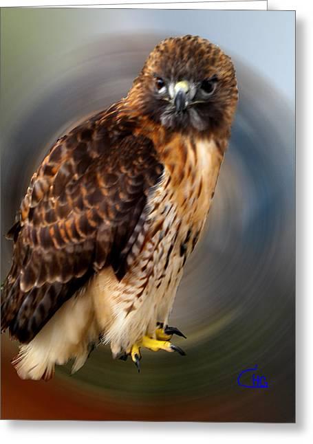 Framedprint Greeting Cards - Falco 2 tinnunculus VF Greeting Card by Colette V Hera  Guggenheim