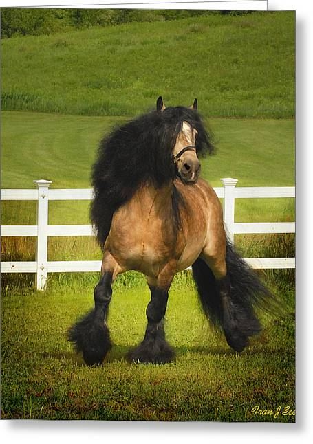 Gypsy Horse Greeting Cards - Falcon C2 Greeting Card by Fran J Scott