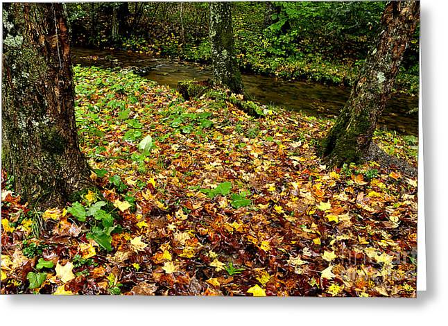 Fall along Middle Fork Greeting Card by Thomas R Fletcher