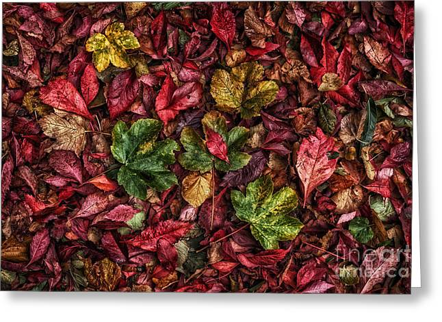 Fall Autumn Leaves Greeting Card by John Farnan