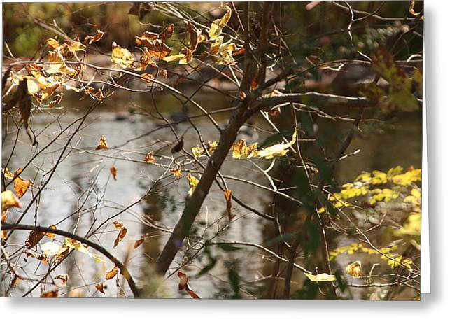 Indiana Landscapes Mixed Media Greeting Cards - Fall Greeting Card by Bruce McEntyre