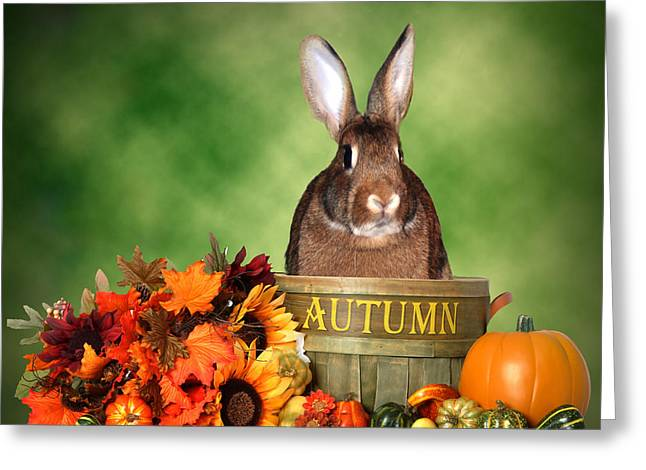 Halloween Greeting Cards - Fall Bunny Greeting Card by Diane Bell