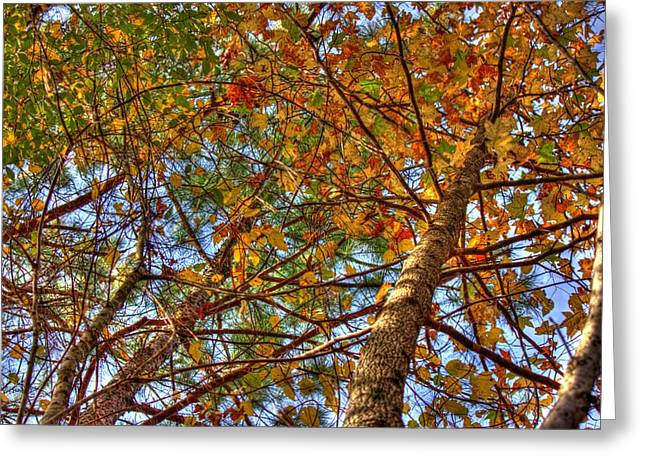 Fall Canopy Greeting Card by Barry Jones