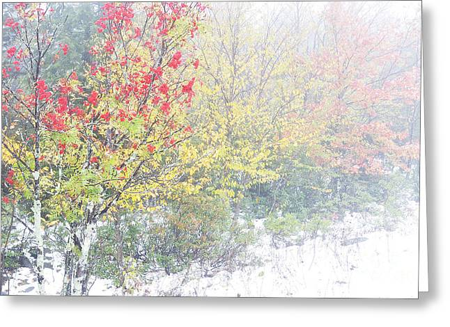 West Virginia Snow Scene Greeting Cards - Fall color and Snow  Greeting Card by Thomas R Fletcher