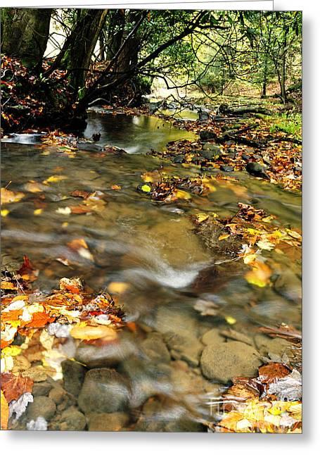 Nicholas Greeting Cards - Fall Color Anthony Creek Greeting Card by Thomas R Fletcher