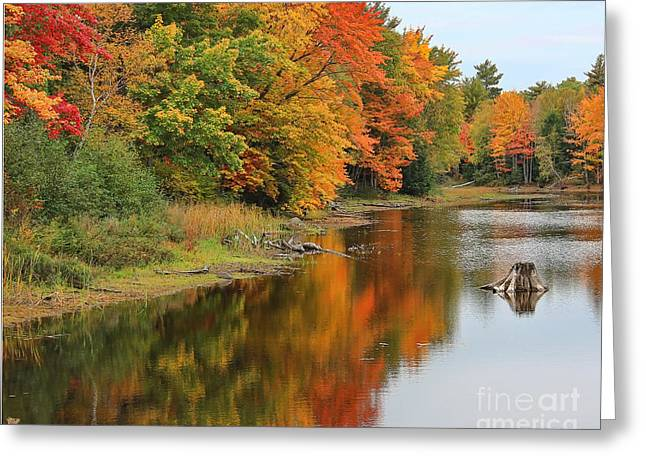 Maine Lake Greeting Cards - Fall Color Reflection on Lake in Maine Greeting Card by Jack Schultz