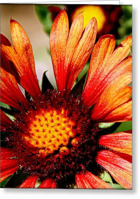Fall Photographs Greeting Cards - Fall Colors - II Greeting Card by Tam Graff