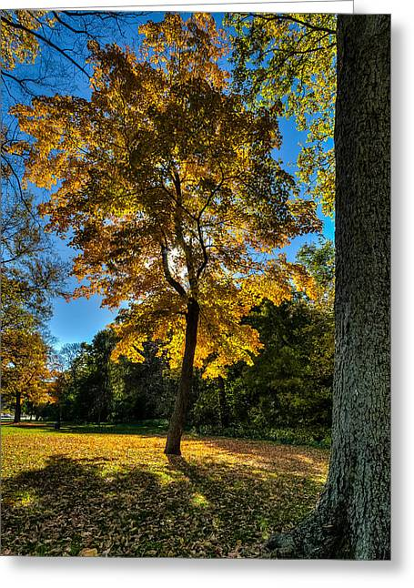 North America Greeting Cards - Fall Colors Four Greeting Card by Josh Whalen