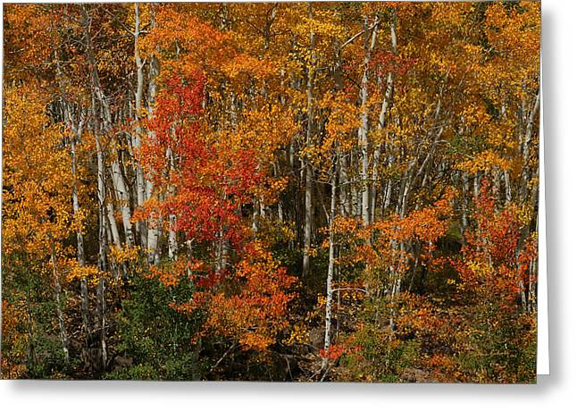 Fall Colors Grand Mesa Greeting Card by Ernie Echols