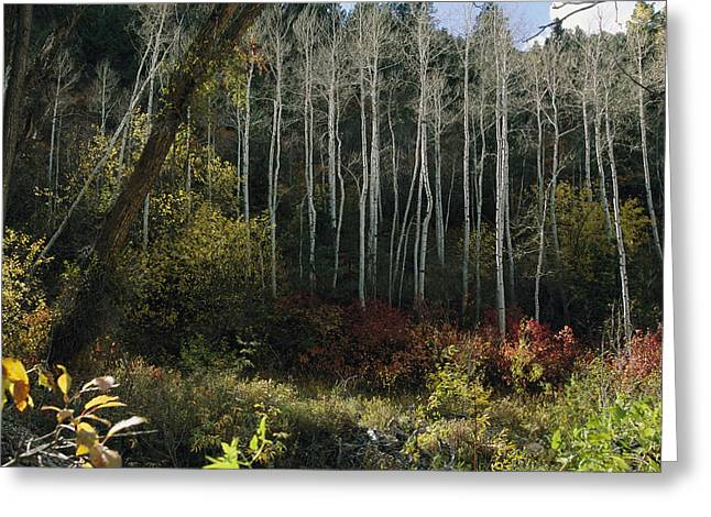 Woodland Scenes Greeting Cards - Fall Colors In The Woodlands Of The San Greeting Card by Melissa Farlow