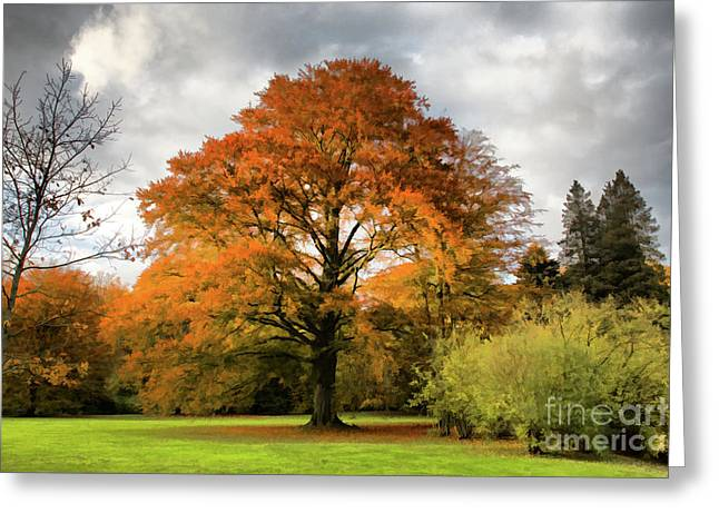 Canon 40d Greeting Cards - Fall colors Greeting Card by Joerg Lingnau