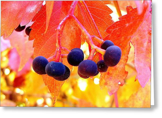 Fall Colors Greeting Card by Marilyn Magee