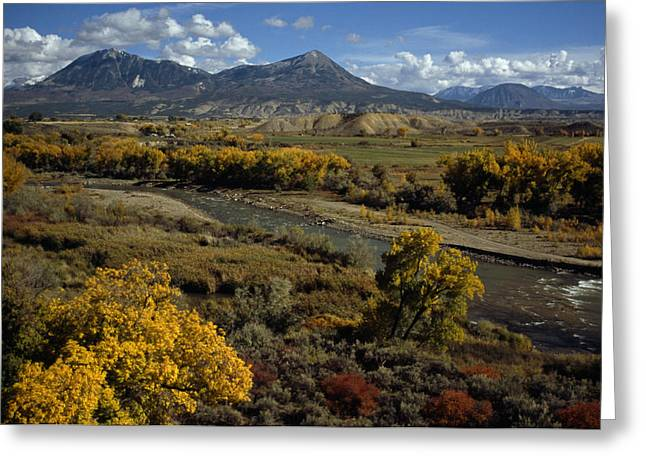 Plant Color Changes Greeting Cards - Fall Colors Near Durango, Colorado Greeting Card by Lynn Johnson