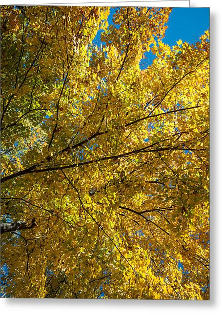 Up201209 Greeting Cards - Fall Colors Seven Greeting Card by Josh Whalen