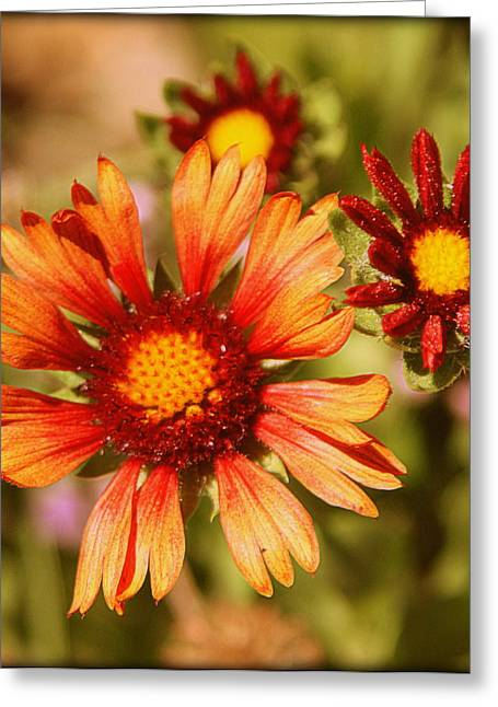 Autumn Photographs Greeting Cards - Fall Colors Greeting Card by Tam Graff