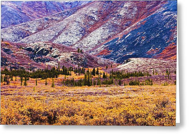 Fall Colours In Ogilvie Mountains Greeting Card by Yves Marcoux