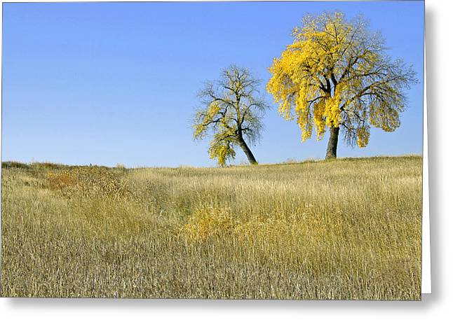 Fall days in Fort Collins CO Greeting Card by James Steele