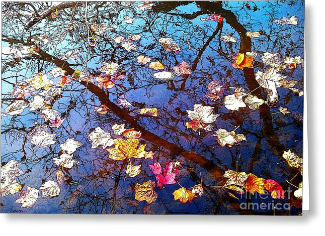 Fallen Leaf Greeting Cards - Fall Greeting Card by Eena Bo