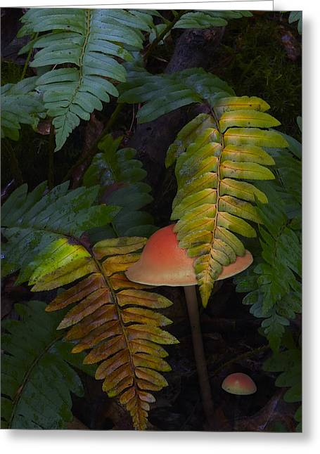 Toadstools Greeting Cards - Fall Ferns Greeting Card by Ron Jones