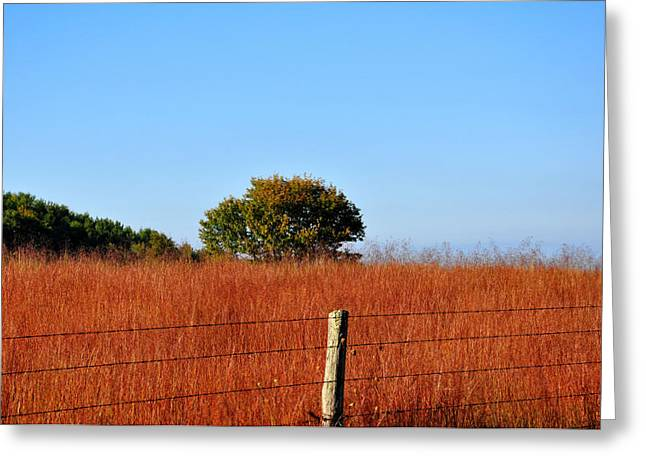 Wire Tree Greeting Cards - Fall Field Greeting Card by Todd Hostetter
