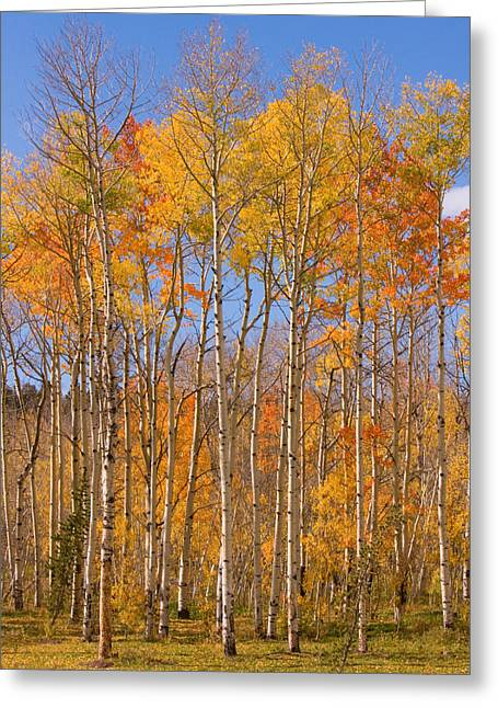 Striking Images Greeting Cards - Fall Foliage Color Vertical Image Greeting Card by James BO  Insogna