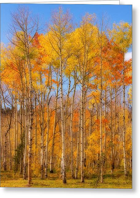 Striking Images Greeting Cards - Fall Foliage Color Vertical image Orton Greeting Card by James BO  Insogna