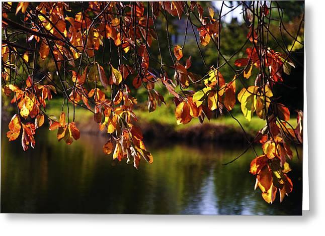 Babylon Greeting Cards - Fall Foliage in Babylon Village Greeting Card by Vicki Jauron