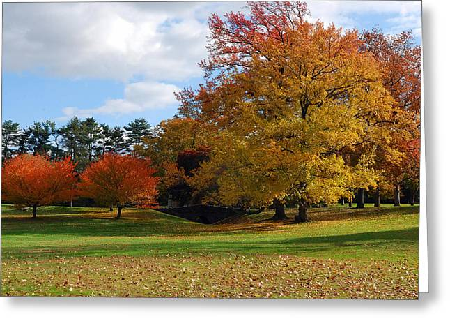 Fall Foliage Greeting Card by Lisa Phillips