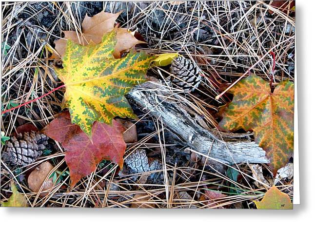 Compost Greeting Cards - Fall Forest Floor Greeting Card by Will Borden