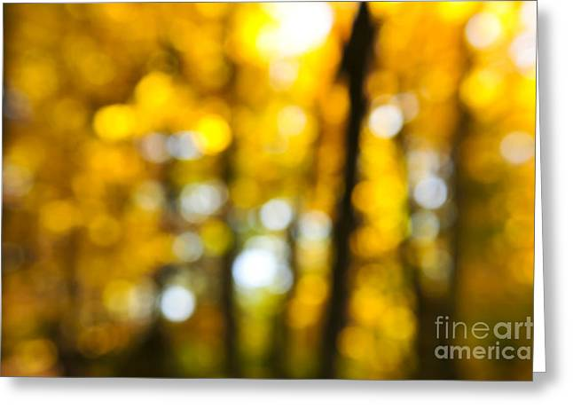 Organic Photographs Greeting Cards - Fall forest in sunshine Greeting Card by Elena Elisseeva