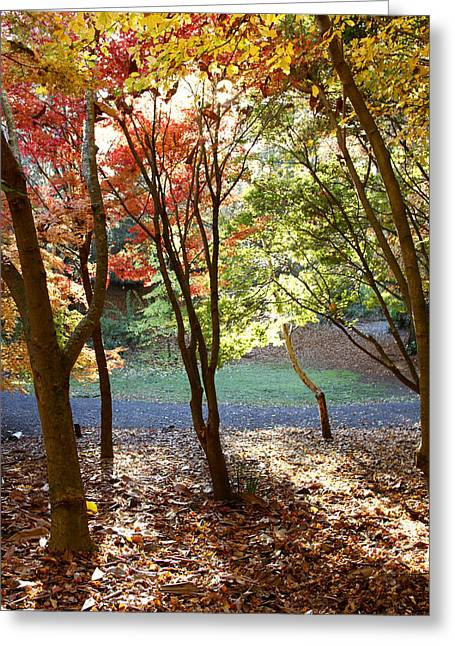 Autumn Photographs Greeting Cards - Fall forest Greeting Card by Les Cunliffe