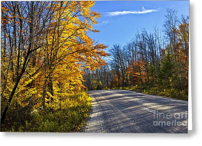 Gravel Road Greeting Cards - Fall forest road Greeting Card by Elena Elisseeva