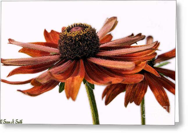 Susan Smith Greeting Cards - Fall Girls Greeting Card by Susan Smith