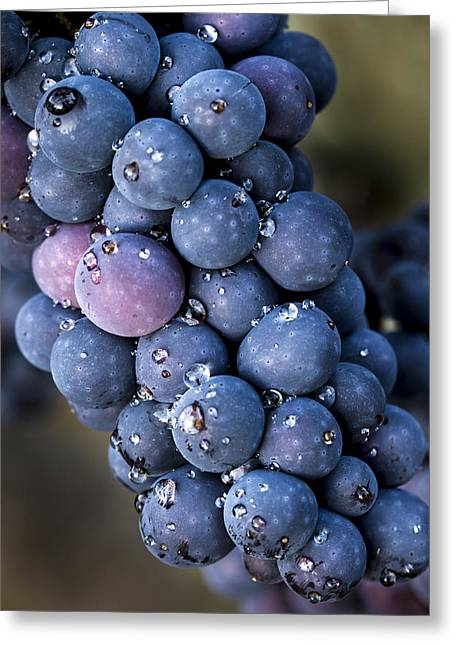 Purple Grapes Greeting Cards - Fall grapes Greeting Card by Jean Noren