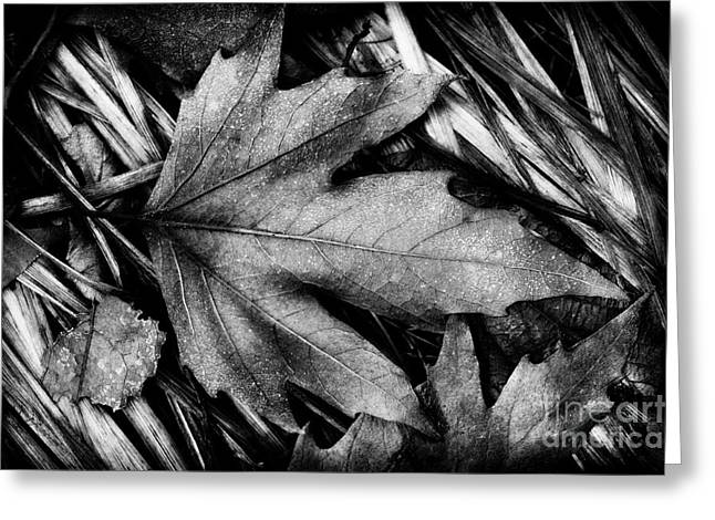 Aging Process Greeting Cards - Fall in Black and White Greeting Card by Venetta Archer