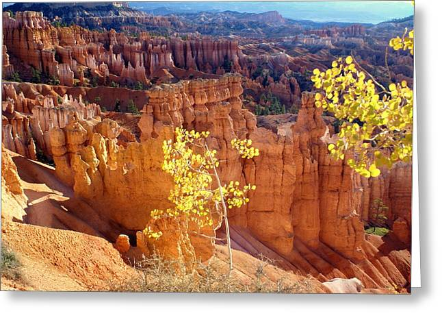 Marty Koch Greeting Cards - Fall in Bryce Canyon Greeting Card by Marty Koch