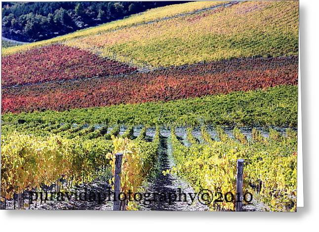 Radda In Chianti Greeting Cards - Fall in Tuscany Greeting Card by Rosanne Nitti