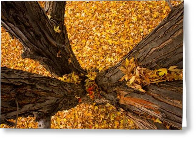 Striking Images Greeting Cards - Fall Greeting Card by James BO  Insogna
