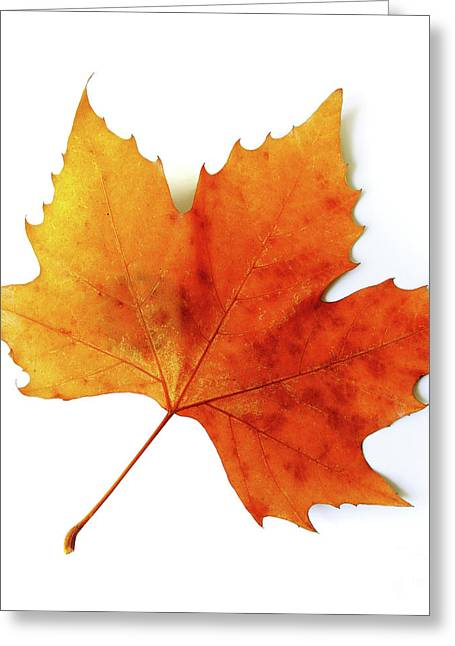 Gold Leave Greeting Cards - Fall Leaf Greeting Card by Carlos Caetano