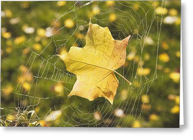 Ground Level Greeting Cards - Fall Leaf In A Spider Web Greeting Card by Craig Tuttle