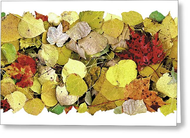 Forrests Greeting Cards - Fall Leaf Vignette Greeting Card by JQ Licensing