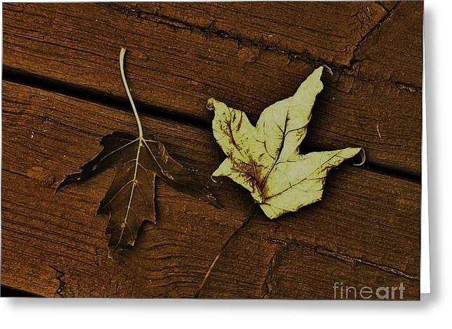 Fall Photos Digital Art Greeting Cards - Fall Leaves Abstract Greeting Card by Marsha Heiken